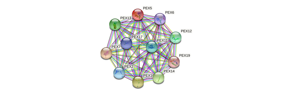 PEX5 protein (Saccharomyces cerevisiae) - STRING interaction network