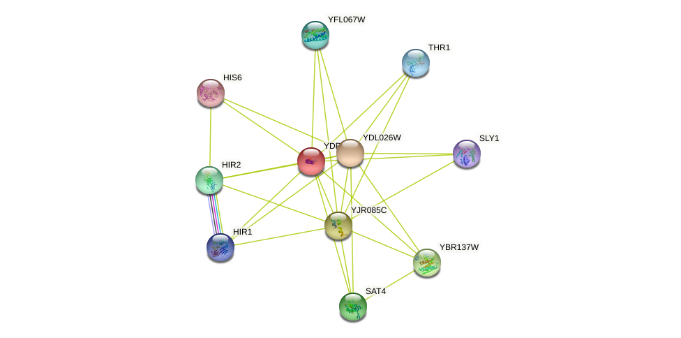 YDR249C protein (Saccharomyces cerevisiae) - STRING interaction network