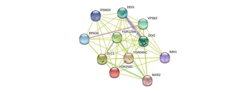 YDR250C protein (Saccharomyces cerevisiae) - STRING interaction network