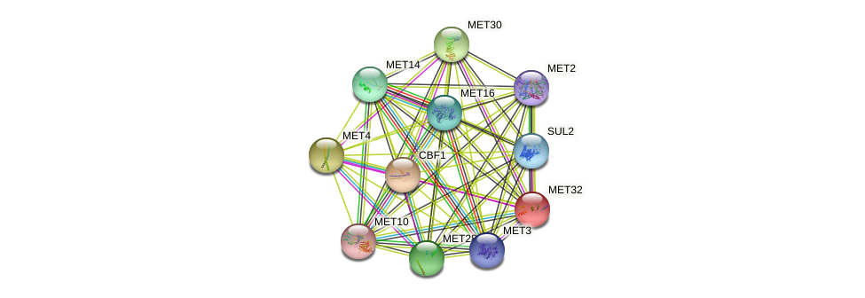 MET32 protein (Saccharomyces cerevisiae) - STRING interaction network