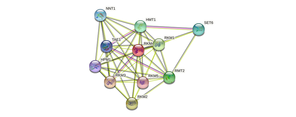 RKM4 protein (Saccharomyces cerevisiae) - STRING interaction network