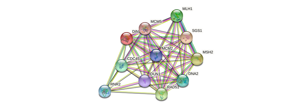 DIN7 protein (Saccharomyces cerevisiae) - STRING interaction network