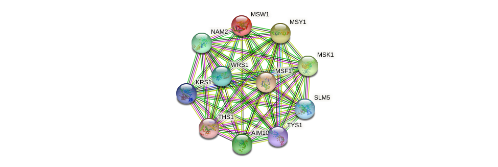 MSW1 protein (Saccharomyces cerevisiae) - STRING interaction network