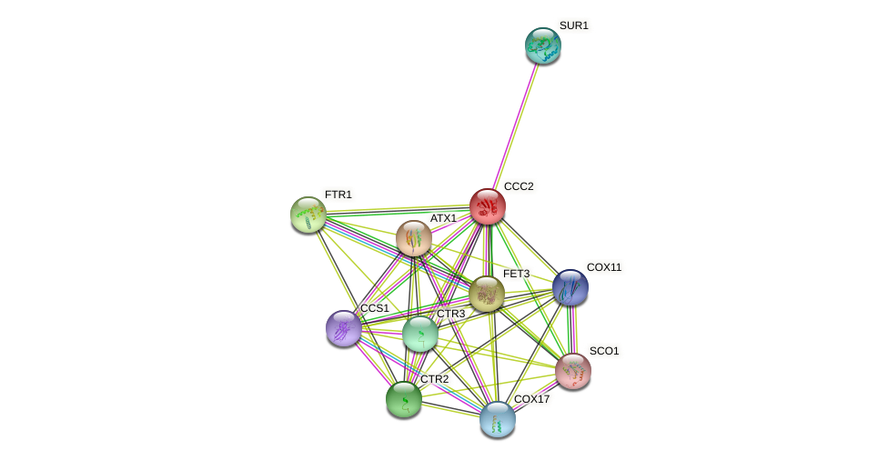 CCC2 protein (Saccharomyces cerevisiae) - STRING interaction network