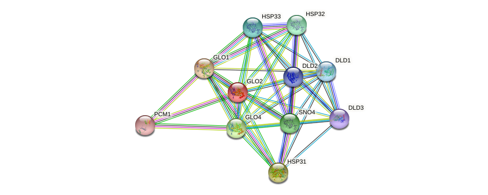 GLO2 protein (Saccharomyces cerevisiae) - STRING interaction network