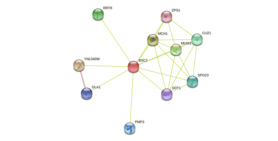 BSC2 protein (Saccharomyces cerevisiae) - STRING interaction network