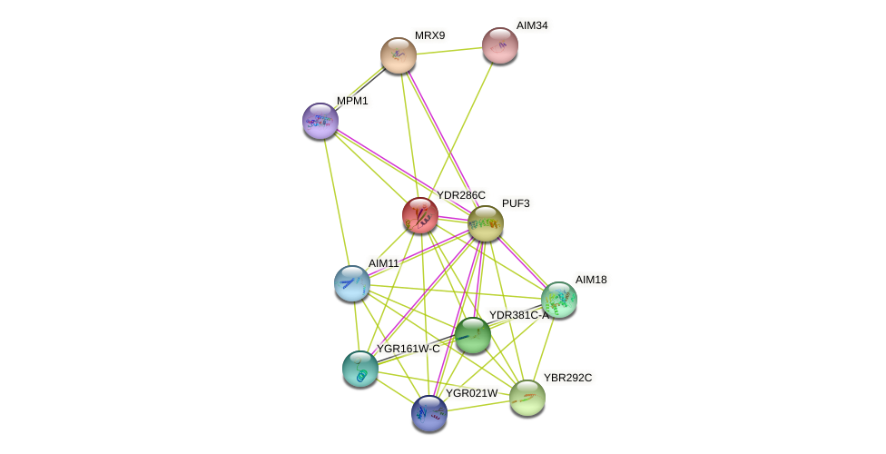 YDR286C protein (Saccharomyces cerevisiae) - STRING interaction network