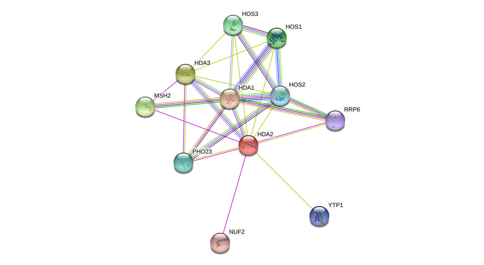 HDA2 protein (Saccharomyces cerevisiae) - STRING interaction network