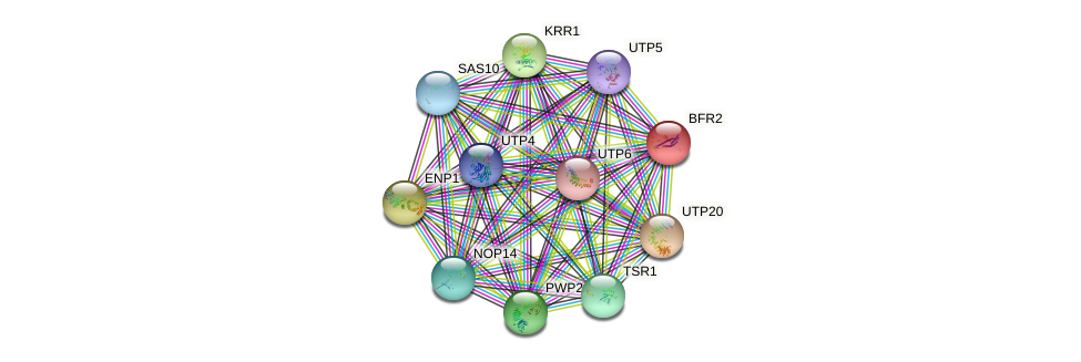 BFR2 protein (Saccharomyces cerevisiae) - STRING interaction network
