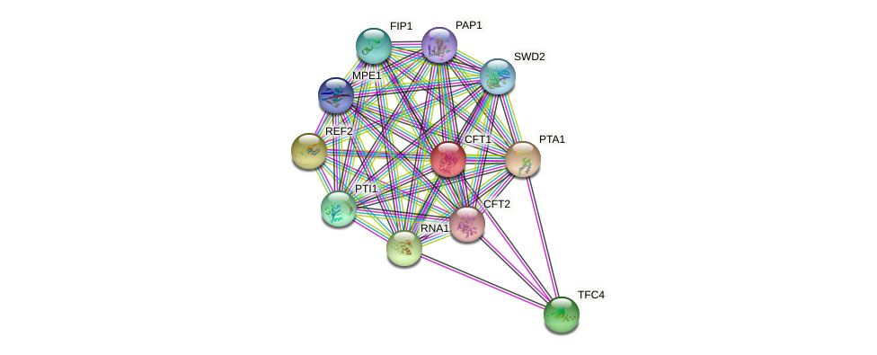 CFT1 protein (Saccharomyces cerevisiae) - STRING interaction network