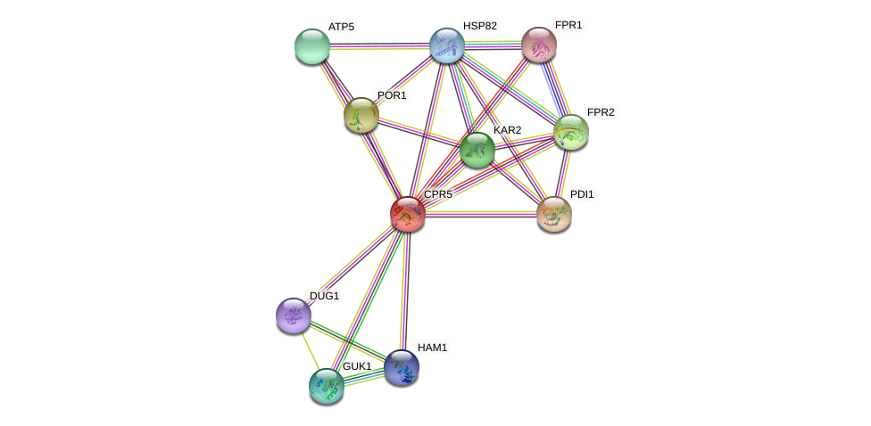 CPR5 protein (Saccharomyces cerevisiae) - STRING interaction network