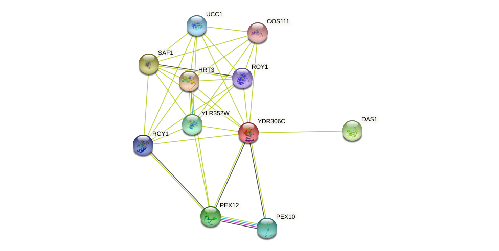 YDR306C protein (Saccharomyces cerevisiae) - STRING interaction network