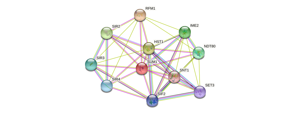 SUM1 protein (Saccharomyces cerevisiae) - STRING interaction network