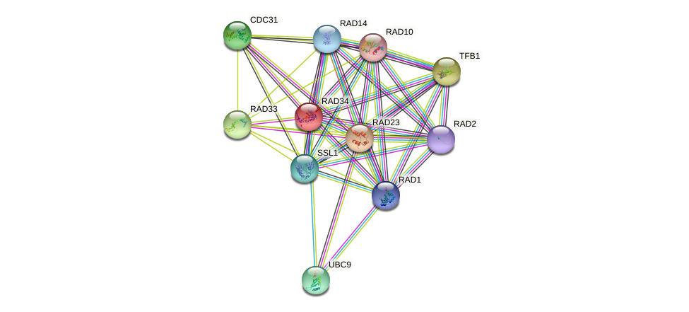 RAD34 protein (Saccharomyces cerevisiae) - STRING interaction network
