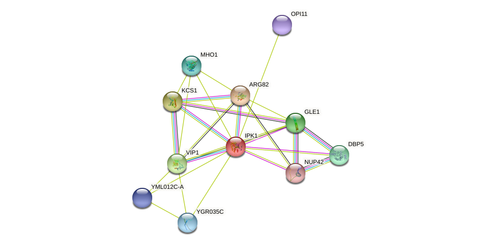 IPK1 protein (Saccharomyces cerevisiae) - STRING interaction network