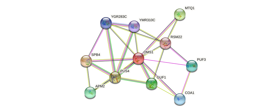 OMS1 protein (Saccharomyces cerevisiae) - STRING interaction network