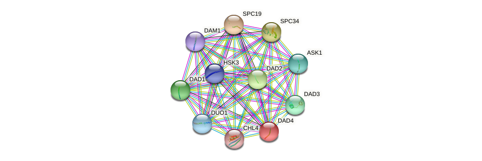 DAD4 protein (Saccharomyces cerevisiae) - STRING interaction network