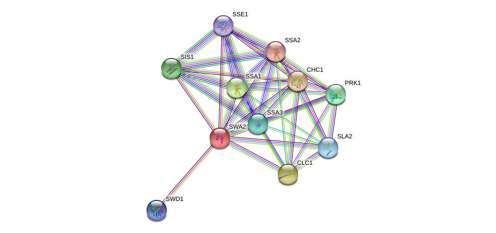 SWA2 protein (Saccharomyces cerevisiae) - STRING interaction network