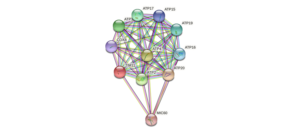 TIM11 protein (Saccharomyces cerevisiae) - STRING interaction network