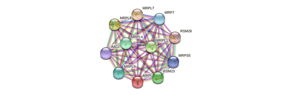 MRPL35 protein (Saccharomyces cerevisiae) - STRING interaction network