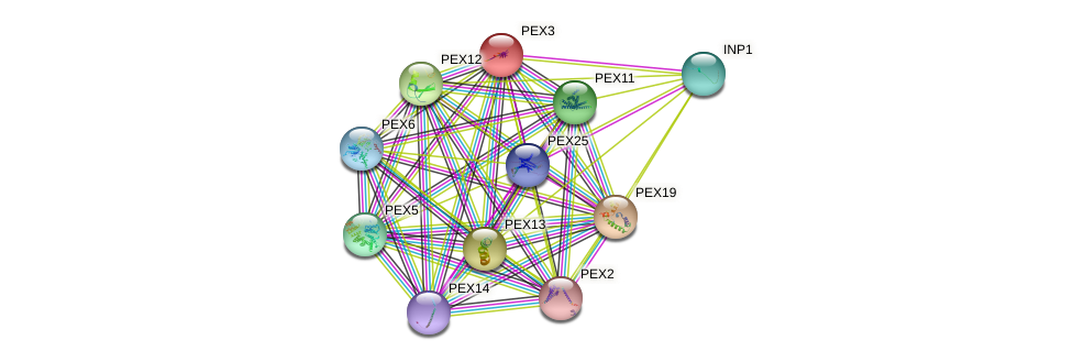 PEX3 protein (Saccharomyces cerevisiae) - STRING interaction network
