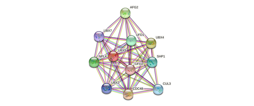UBX5 protein (Saccharomyces cerevisiae) - STRING interaction network