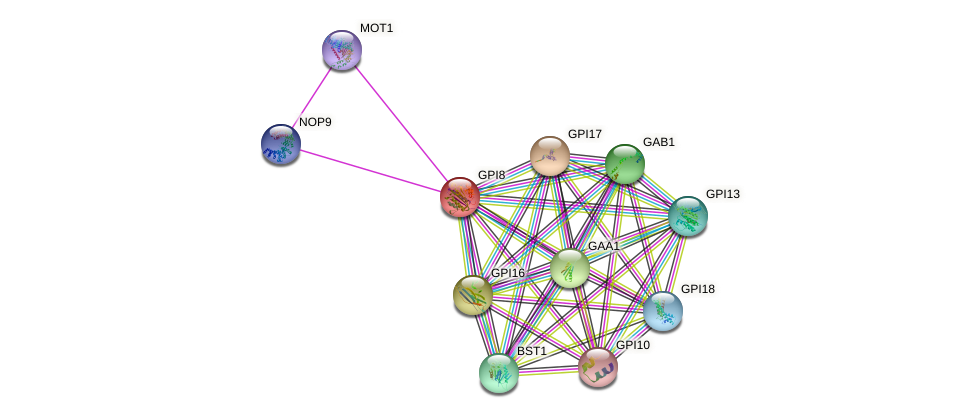 GPI8 protein (Saccharomyces cerevisiae) - STRING interaction network