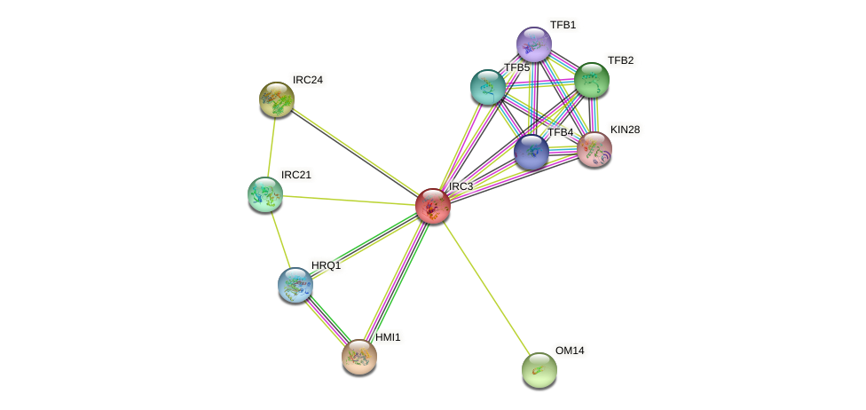 IRC3 protein (Saccharomyces cerevisiae) - STRING interaction network