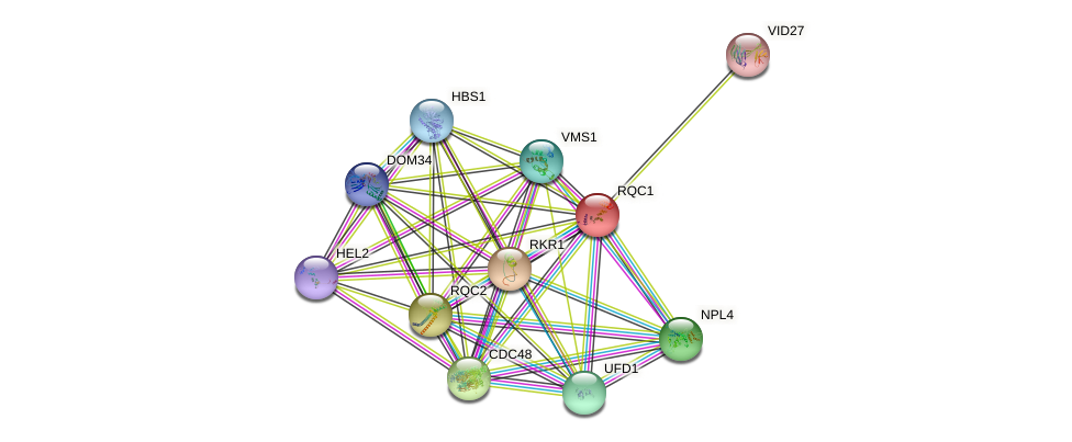 RQC1 protein (Saccharomyces cerevisiae) - STRING interaction network