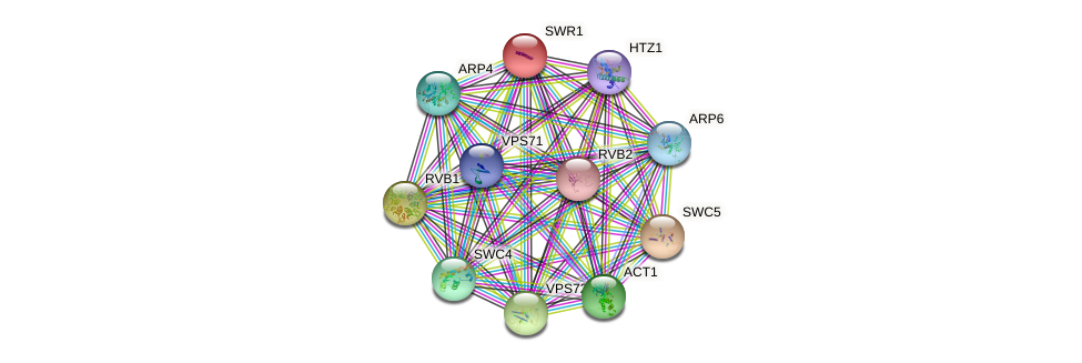 SWR1 protein (Saccharomyces cerevisiae) - STRING interaction network