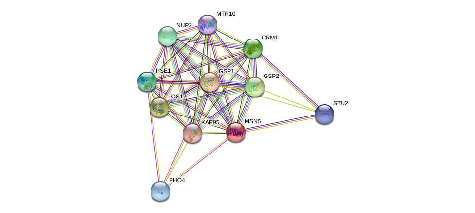 MSN5 protein (Saccharomyces cerevisiae) - STRING interaction network