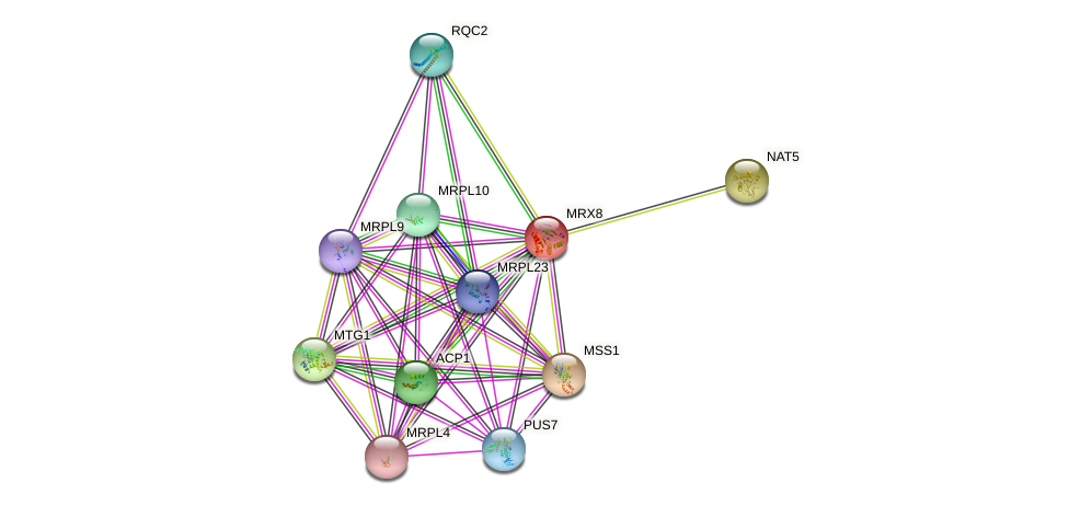 MRX8 protein (Saccharomyces cerevisiae) - STRING interaction network