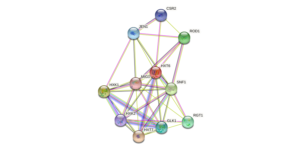 HXT6 protein (Saccharomyces cerevisiae) - STRING interaction network