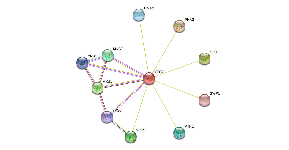YPS7 protein (Saccharomyces cerevisiae) - STRING interaction network