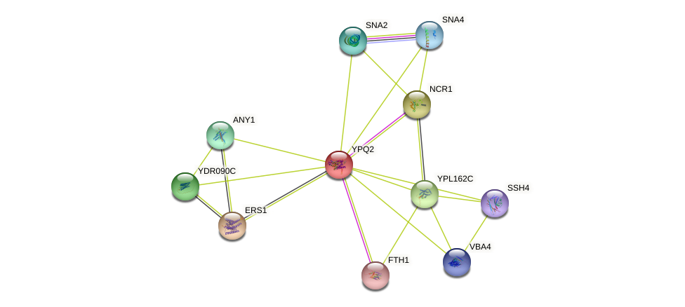 YPQ2 protein (Saccharomyces cerevisiae) - STRING interaction network