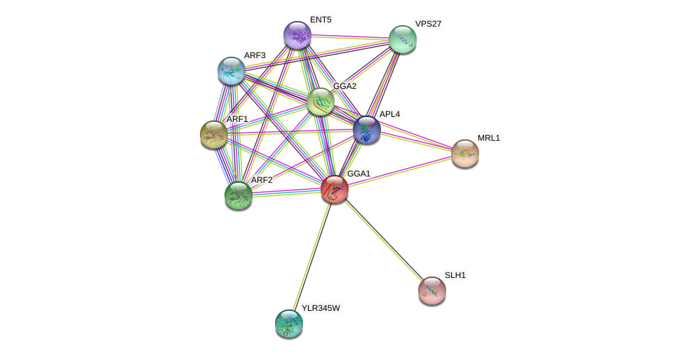 GGA1 protein (Saccharomyces cerevisiae) - STRING interaction network