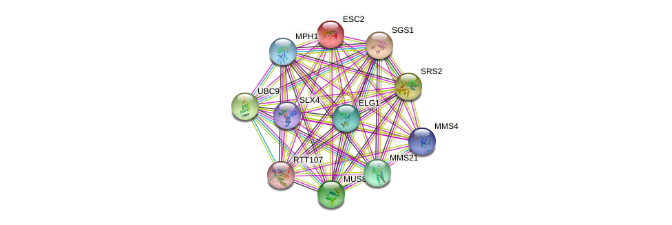 ESC2 protein (Saccharomyces cerevisiae) - STRING interaction network