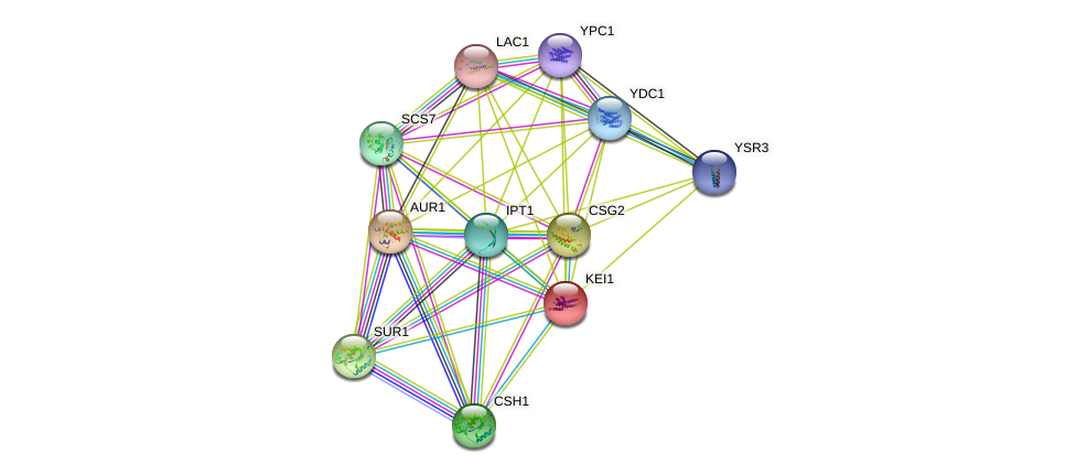 KEI1 protein (Saccharomyces cerevisiae) - STRING interaction network