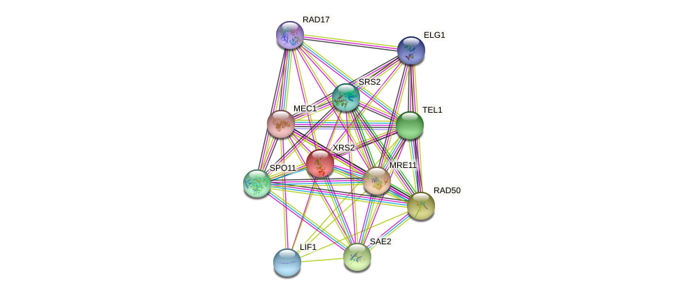 XRS2 protein (Saccharomyces cerevisiae) - STRING interaction network