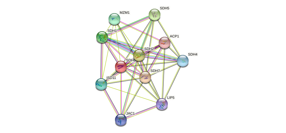 SDH6 protein (Saccharomyces cerevisiae) - STRING interaction network