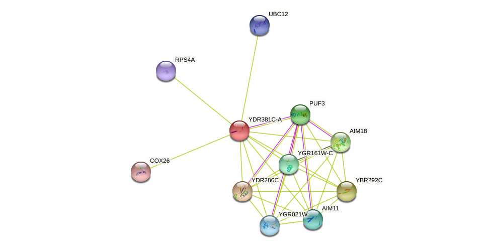 YDR381C-A protein (Saccharomyces cerevisiae) - STRING interaction network