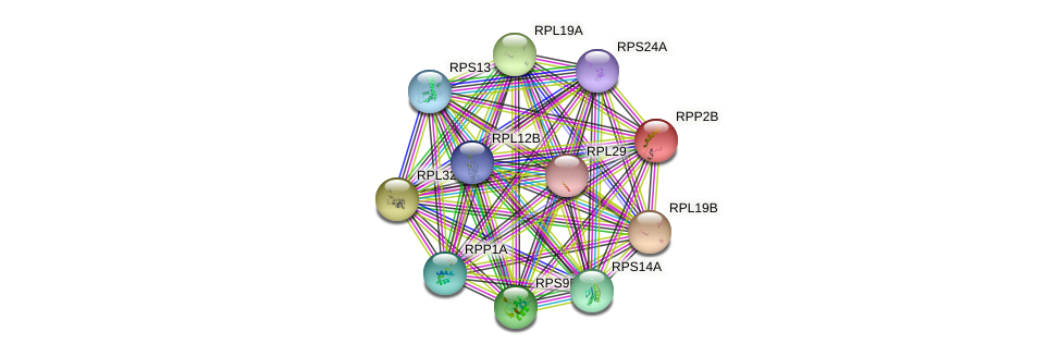 RPP2B protein (Saccharomyces cerevisiae) - STRING interaction network