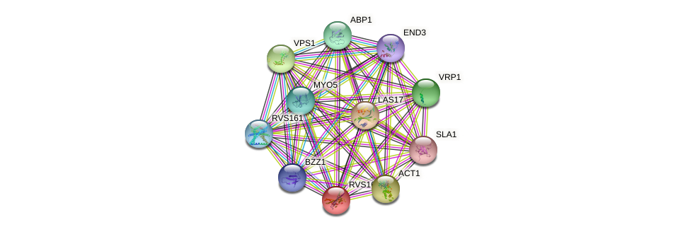 RVS167 protein (Saccharomyces cerevisiae) - STRING interaction network