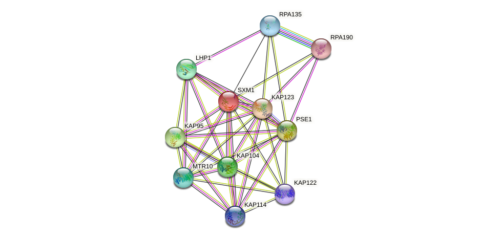 SXM1 protein (Saccharomyces cerevisiae) - STRING interaction network