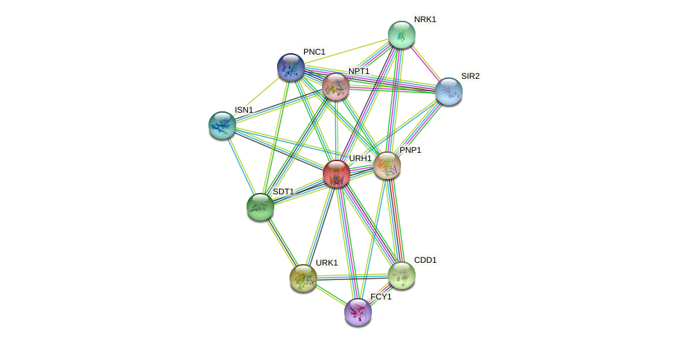 URH1 protein (Saccharomyces cerevisiae) - STRING interaction network
