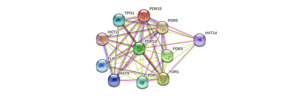 PDR15 protein (Saccharomyces cerevisiae) - STRING interaction network
