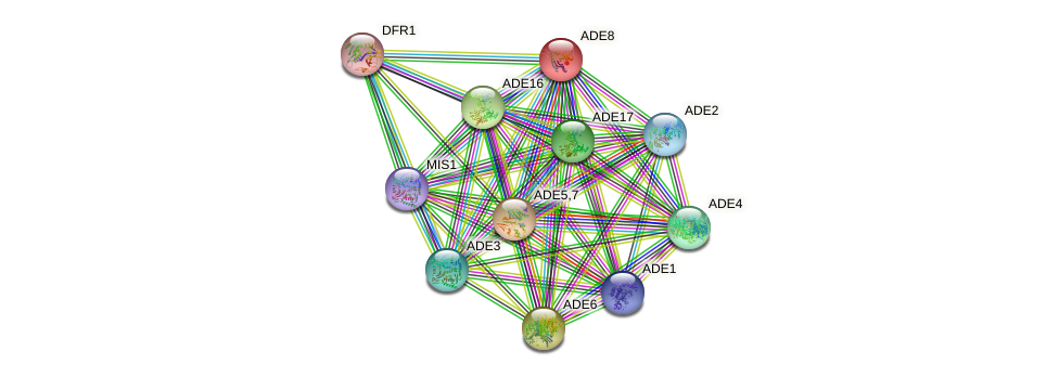 ADE8 protein (Saccharomyces cerevisiae) - STRING interaction network
