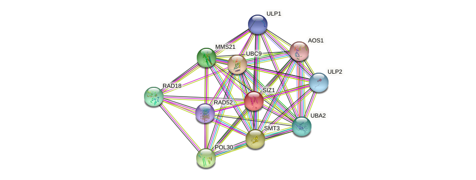 SIZ1 protein (Saccharomyces cerevisiae) - STRING interaction network