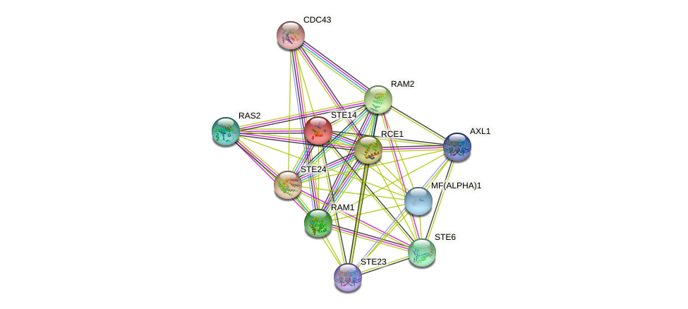 STE14 protein (Saccharomyces cerevisiae) - STRING interaction network