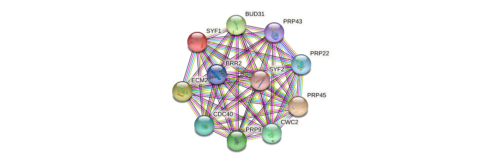 SYF1 protein (Saccharomyces cerevisiae) - STRING interaction network